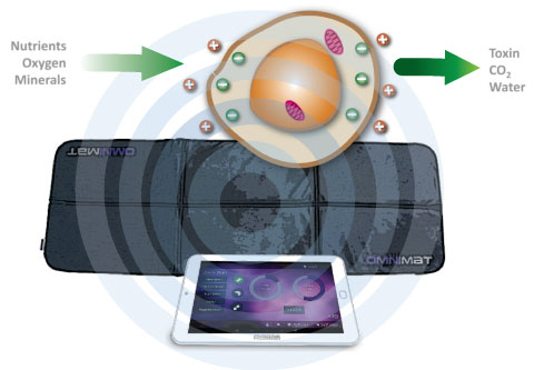 Pulsed Electromagnetic Field PEMF effect on Cellular Health